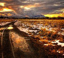 Follow the Tracks by Bob Larson