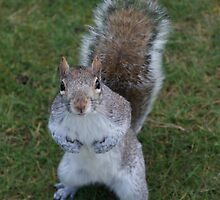 Squirrel by mechelle853