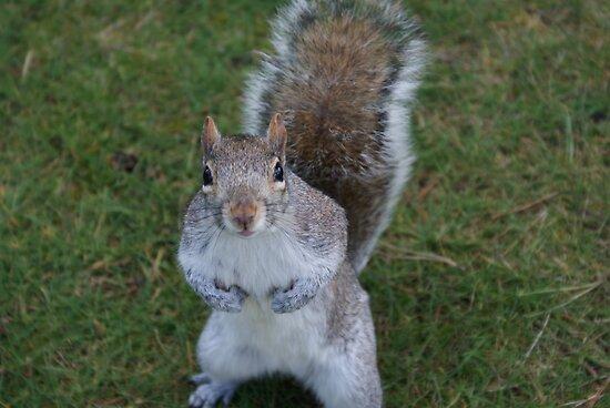 Squirrel by mechelle853