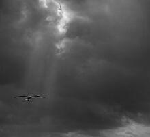 Heavenly Gull by Cathy L. Gregg