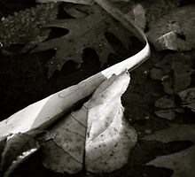 Puddle Leaves in B&W by Lynn Wiles