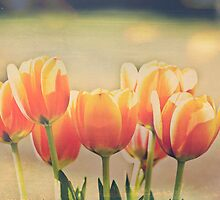 Group of tulips by Julia Goss