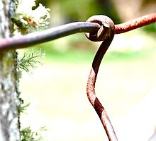 Rusted Grip of a Weathered Fence by Kori Eryn
