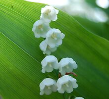 White Bells in the Green of Diamond Hill by Kori Eryn