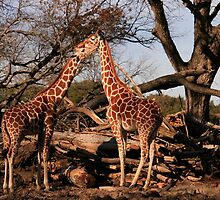 A Little Necking by Susan Russell
