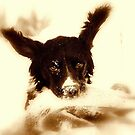 springer i sepia by Alan Mattison IPA