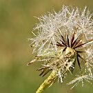 Just Dandy by Lawrie McConnell