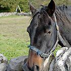 Horse Portrait, Monyash by Rod Johnson