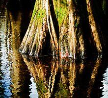 bald cypress by Phillip M. Burrow