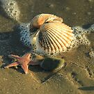 Starfish & Shell by Martina Fagan