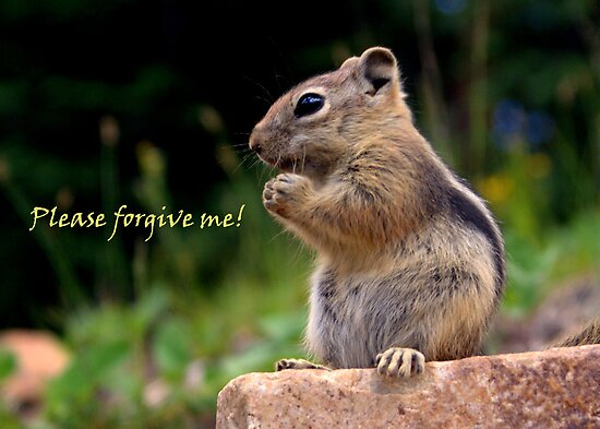 Please Forgive Me by Betsy  Seeton