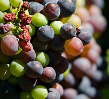 Pinot Veraison by Di Jenkins