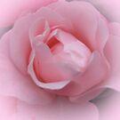 Pretty in Pink !! by AnnDixon
