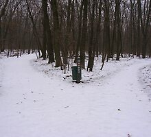 Wildwood Park - Toledo Metroparks Winter 2010 by Kenneth Mennell