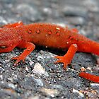 Red-Eyed Newt by justmartha