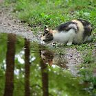 Callie Cat, Taking Advantage Of The Spring Puddle by NatureGreeting Cards ©ccwri