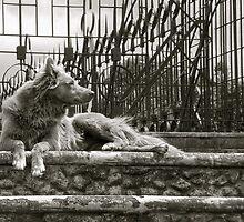 Perro de Coronado by Scott K Wimer