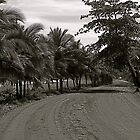 Road to Puerto Viejo de Talamanca by Scott K Wimer