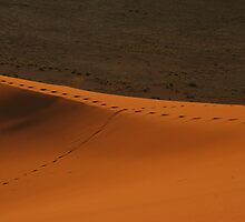 Trails on a ridge of sand by christopher363