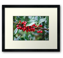 Red, Red Berries of the Holly Tree Framed Print