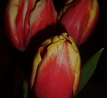 Tulip's Heart by CleoMaitra