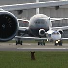 Planespotting fox! by PerfectMoment