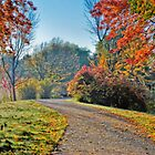 Winding Path by Jim Terry