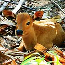 Young Balinese calf in the banana forest by Michael Brewer