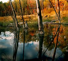 Beaver Pond - Itasca State Park by Cushman
