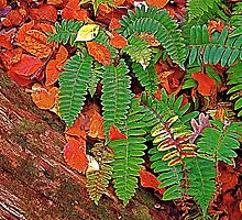 Autumn Ferns and Leaves, Forest Scene by trevortrent