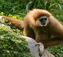 Monkey Pause by Jon Taylor