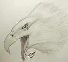 Bald Eagle Sketch by janetmarston