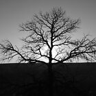 Growing Roots by Avner