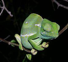 Flap neck Chameleon by Riaan van der Merwe
