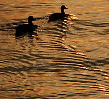 Ripples in the Sunset (Rhode Island) by BGpix