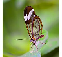 See Through Butterfly Photographic Print