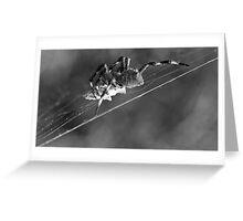 Tightrope Greeting Card