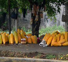 huge papayas by Scott K Wimer