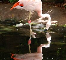 Flamingo Fancy by GraceNotes