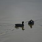 Mr. and Mrs. Mud Duck by TxGimGim