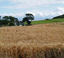 Fields of Barley 2 by WatscapePhoto