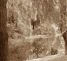 Willow Curtain by Patricia Bier