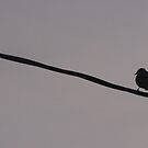 Bird On A Wire... by trueblvr