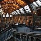 Natural History Museum, London by David James