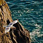 Gull in flight by NeilAlderney