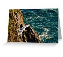 Gull in flight Greeting Card