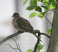 Lonesome Dove by shadyuk
