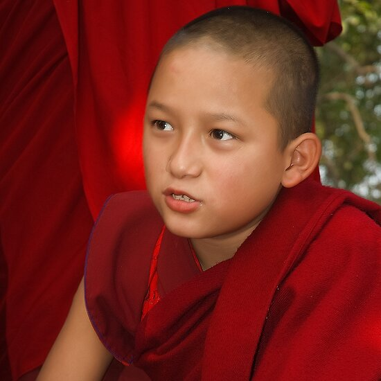 The Confidant Young Monk by Mukesh Srivastava