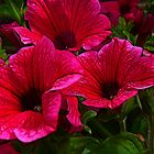 Fractalius Petunias by Trevor Kersley