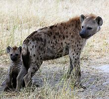 Mother Hyena with pup by nymphalid